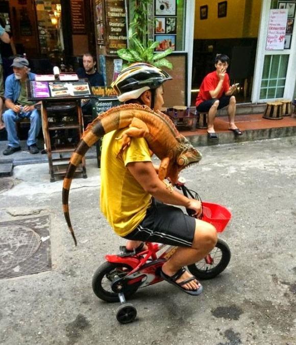 30 шокирующих снимков, которые можно сделать только в Азии