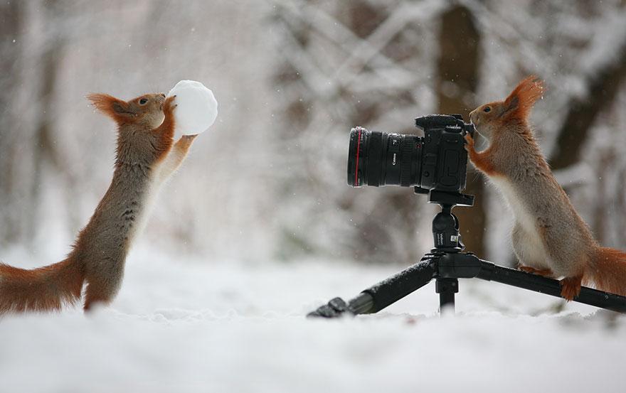 Русский фотограф запечатлел самых симпатичных и забавных белок на свете