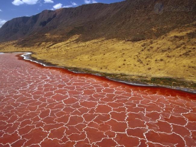 10 фото настоящего адского озера Натрон, при виде которого в жилах стынет кровь