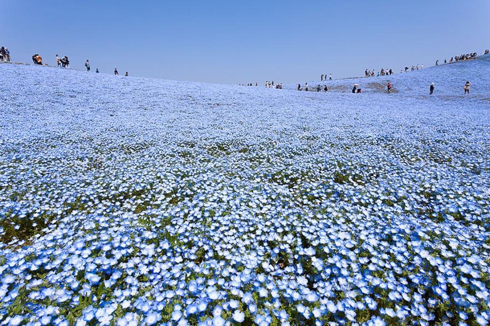 10 ошеломляющих фото небесного парка в Японии, в реальность которого сложно поверить