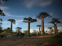 15 Вдохновляющих лесов планеты Земля