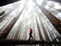 58 невероятных фотографий национальных парков Америки. Часть 1