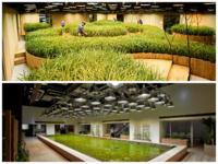 21 самое озелененное пространство на земле