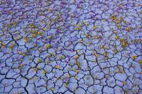 Редкое цветение посреди безжизненной пустыни