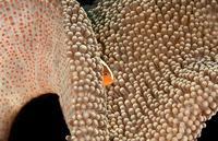 10 захватывающих дух снимков пестрого мира коралловых рифов