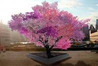 Самое уникальное дерево в мире