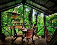 20 легендарных домов на деревьях со всего мира (часть 1)