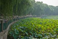 Оазис мегаполиса. 7 самых красивых городских парков планеты