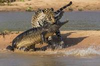 Топ-10 самых лучших фотографий дикой природы. Каждая из них - шедевр!
