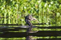 Самое огромное болото в мире Пантанал — вы удивитесь разнообразию его обитателей