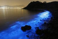 Фантастическое сияние биолюминесцентного планктона в водах у берегов Гонконга