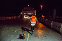 Фотограф сделал портреты самых трудолюбивых собак со всего мира