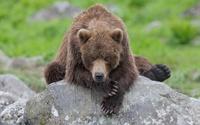 25 потрясающих снимков Камчатки и ее неповторимой фауны