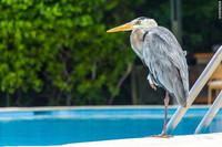 14 поразительных представителей морского и наземного животного мира Галапагосских островов