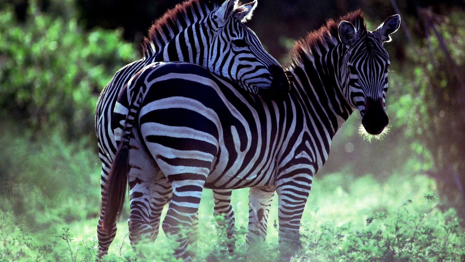 Любовь и дружба в мире животных 8097c90553cd6
