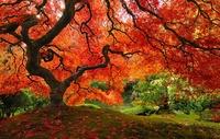 16 самых великолепных деревьев в мире