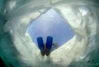 Погружение дайверов под лед Байкала
