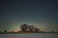 Бет Мун сделала потрясающие «космические»снимки самых старых в мире деревьев