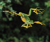 10 самых крутых и необычных лягушек и жаб в мире