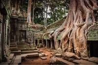 20 фотографий, на которых природа победила цивилизацию