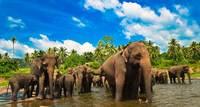 12 причин побывать на Шри-Ланке