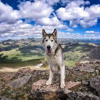 Снимки эпических приключений парня и его собаки облетели весь мир. О таком хозяине мечтают все питомцы!