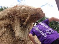 После сбора урожая риса поля в Японии украсили гигантские соломенные динозавры