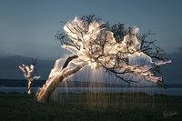 На этих потрясающих снимках Витора Шиетти свет стекает с деревьев!
