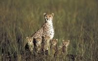 20 поразительных снимков дикой природы от Пола Голдштайна