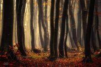 20 нереально красивых снимков сказочных осенних лесов от Янека Седлара