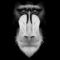 22 снимка дикой природы, которые сражают наповал!
