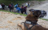 Шокирующая ситуация: реальные масштабы миграционного кризиса в Европе