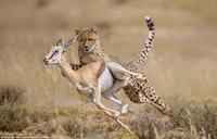 Царство животных: захватывающие кадры погони, драки и нежных моментов