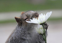 8 очаровательных диких животных, которые тоже любят цветы