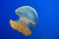 5 cамых опасных обитателей Черного моря