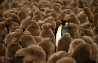 20 очаровательных снимков пингвинов, доказывающих, что не любить этих птиц невозможно!