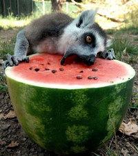 6 фото животных, наслаждающихся обедом, которые заставят тебя улыбнуться
