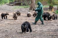 Медвежий дедушка