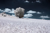 11 необычных снимков величественной красоты деревьев