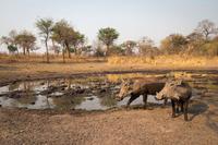 Фотограф-натуралист показал сенсационные снимки животных, сделанные камерой-ловушкой