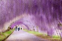 15 великолепных аллей со всего мира, которые утонули в красоте