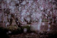 Весна в Японии — это настоящая сказка!