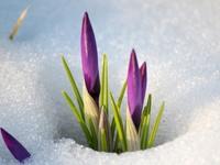 15 прекрасных и радостных снимков о том, что весна наступила