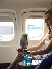 20 самых ужасных моментов, которые приходится переживать во время перелета