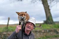 Мужчина спас этих лисиц, и теперь они не отходят от него
