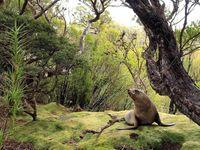 18 незабываемых и экспрессивных снимков дикой природы от National Geographic