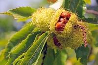 19 вкуснейших даров природы до того, как они попадают на наш стол