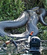 13 странных и страшных диких животных, которых лучше увидеть только на картинке