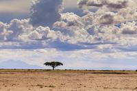 Под крышей Африки. Амбосели