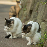 10 забавных снимков уличных котов Токио от японского фотографа